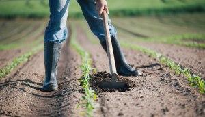 Prestazioni occasionali in agricoltura: cosa sono e chi sono i destinatari?