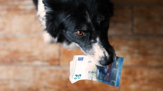 Modello 730/2018: le detrazioni per le spese veterinarie