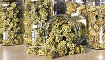 Cannabis legale, la circolare Salvini: limiti imposti dalla legge
