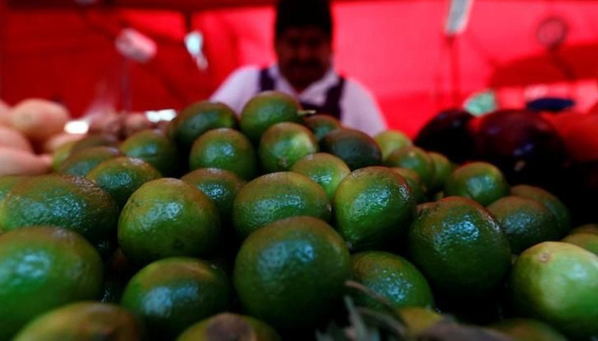Avocado e narcotrafficanti