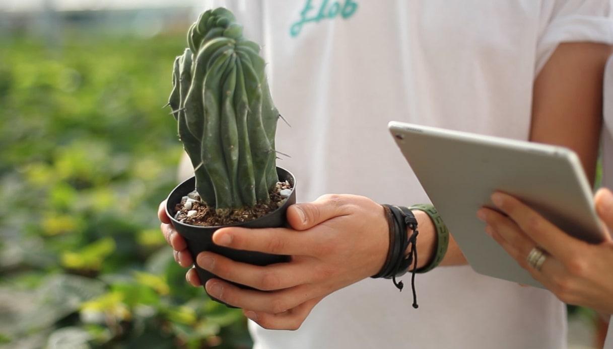 Flob, la startup delle piante