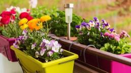 Bonus verde prorogato, novità 2020 per giardini e terrazzi