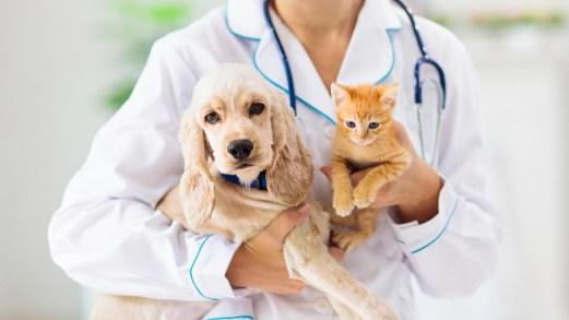 Spese veterinarie e detrazioni 730: chi può beneficiarne?