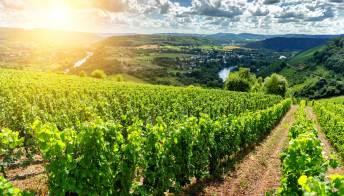 In vendita 16 mila ettari di terreni agricoli. Il bando di Ismea per i giovani